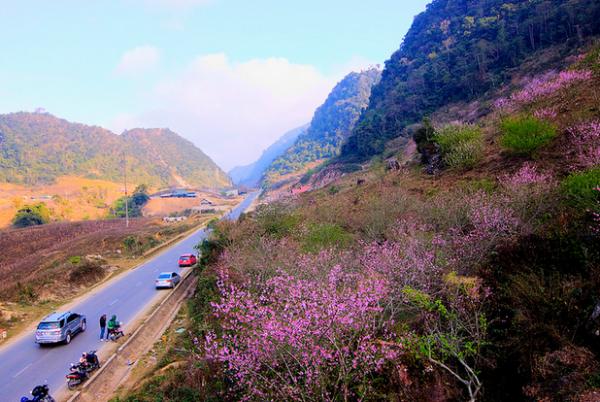 Đi du lịch Mộc Châu mùa đông là đẹp nhất